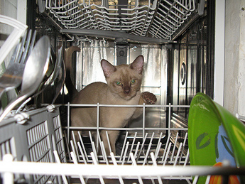 Dishwasher not draining? Perhaps you have a cat in there.