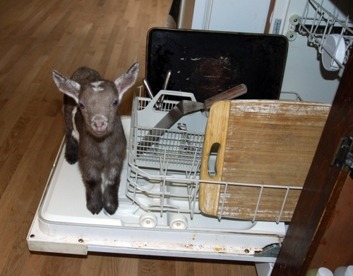Dishwasher got your goat? I've help you tame it.