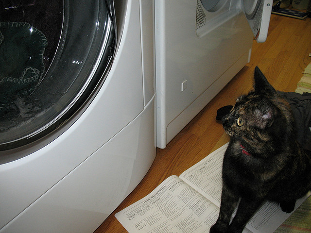 But the washer said it would be done by meow! What's taking so long...